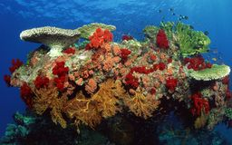 море вниз стоковая фотография rf