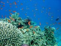 море вниз Стоковое фото RF