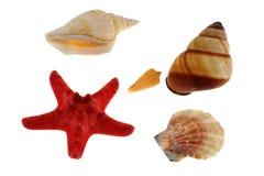 море группы обстреливает starfish Стоковое Изображение