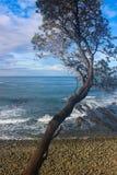 Море дерева и пляж неба стоковые фото