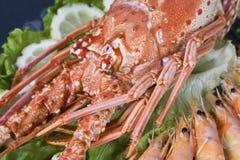 море еды Стоковые Изображения