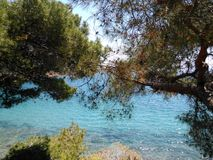 Море дерева Стоковое Фото