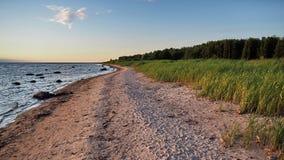 Море леса и голубое небо после захода солнца Стоковое Фото
