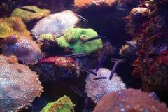 море жизни рыб Стоковые Фотографии RF