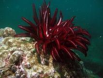 море жизни тропическое Стоковое Изображение RF