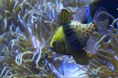море жизни Стоковое фото RF