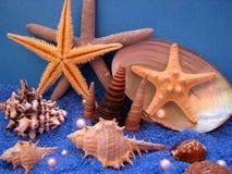 море жизни Стоковые Изображения RF