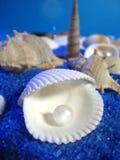 море жизни Стоковое Изображение RF