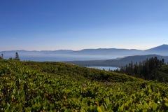 Море зеленого цвета Стоковые Фото