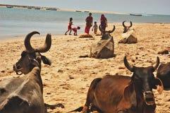море индейца пляжа Стоковые Фото