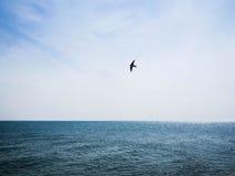 Море и ласточка Стоковое Изображение RF
