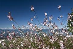 Море и пляж Qualicum стоковое фото rf