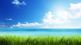 Море и трава стоковые изображения