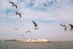 Море и чайки Мумбая в Индии стоковые изображения