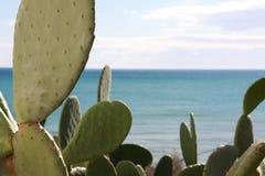 море кактуса Стоковые Изображения RF