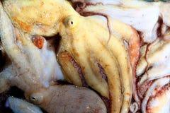море картины восьминога задвижки среднеземноморское Стоковые Фото