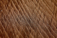 море картины подачи пляжа северное Стоковое Изображение