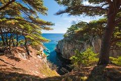 море кедра Стоковая Фотография RF