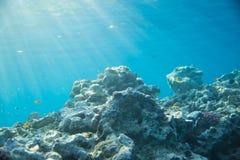 Море, коралл и рыбы коралл под водой Стоковое Изображение RF