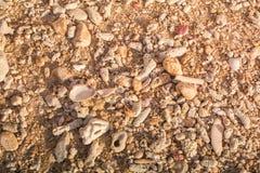 Море коралла камня Брайна предпосылки в Пхукете Таиланде Стоковое фото RF