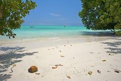 Море коралла Стоковое Фото