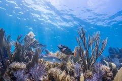 Море коралла Scape стоковые фотографии rf