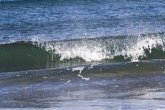 Море красиво в зиме Стоковые Фотографии RF