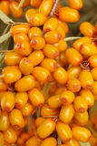 море крушины ягод стоковое фото