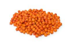 море кучи крушины ягод Стоковые Фото