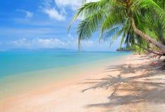 море ладони кокоса пляжа Стоковые Фотографии RF
