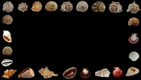 Море лета обстреливает черную предпосылку знамени стоковые изображения