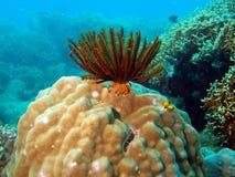 море лилии Стоковое Фото