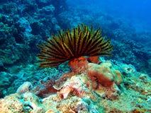 море лилии Стоковое фото RF