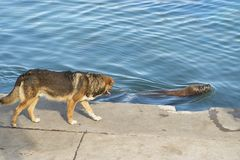 Море Лион и собака Стоковая Фотография
