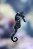 море лошади Стоковые Изображения RF