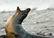 море льва рассвета Стоковые Изображения RF