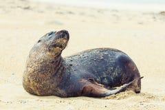 море льва Стоковая Фотография RF