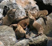 море льва Стоковое фото RF