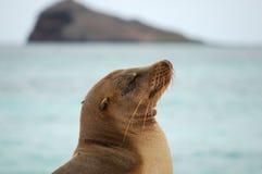 море льва galapagos Стоковое Изображение