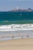 море маяка чаек Стоковая Фотография RF