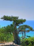 море можжевельника Стоковое Изображение RF