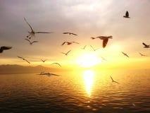 Море мухы захода солнца чайки Стоковое Фото