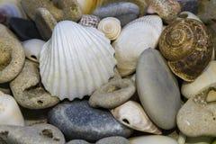 Море обстреливает предпосылку стоковые фотографии rf