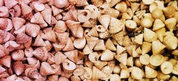 Море обстреливает Seashells Раковины моря от пляжа стоковые фото