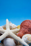 море обстреливает starfish Стоковая Фотография RF