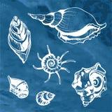 Море обстреливает декоративные значки Стоковое Изображение