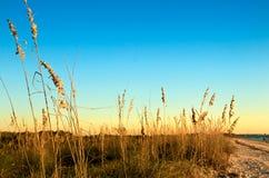 море овсов острова медового месяца Стоковые Изображения