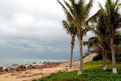 море опасностей кокосов Стоковое фото RF