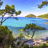Море острова Эльбы, пляж Portoferraio Viticcio побережье и деревья Стоковое Фото