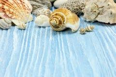 Море отдыхает концепция с раковинами на голубых деревянных покрашенных досках Стоковое фото RF